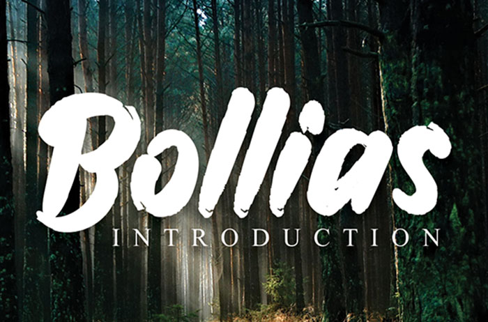 Bollias Brush Font